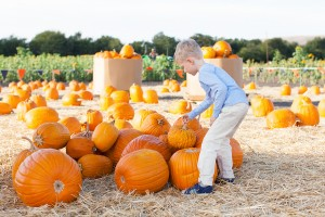 Reality Blog: A Pumpkin Patch Adventure