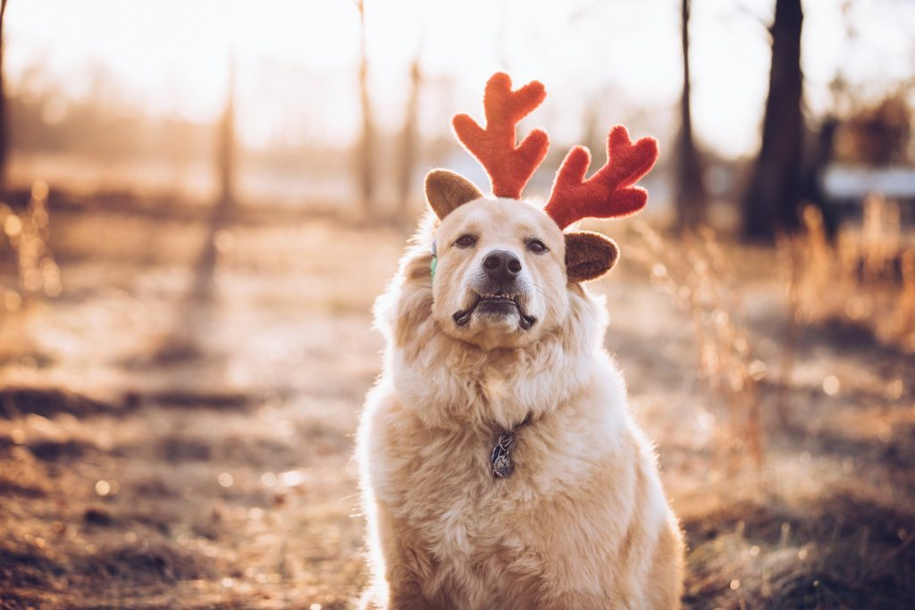 Reality Blog: Rudolph's Top 5 Misfit Tips for Copywriters